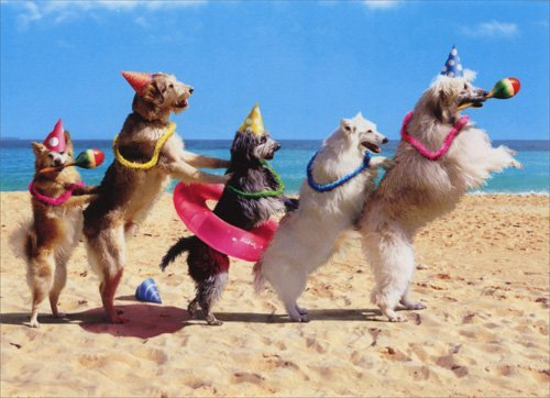 Dog Conga Line - Avanti Funny Birthday Card