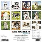 Just Siberian Husky Puppies 2020 Wall Calendar (Dog Breed Calendar) 3