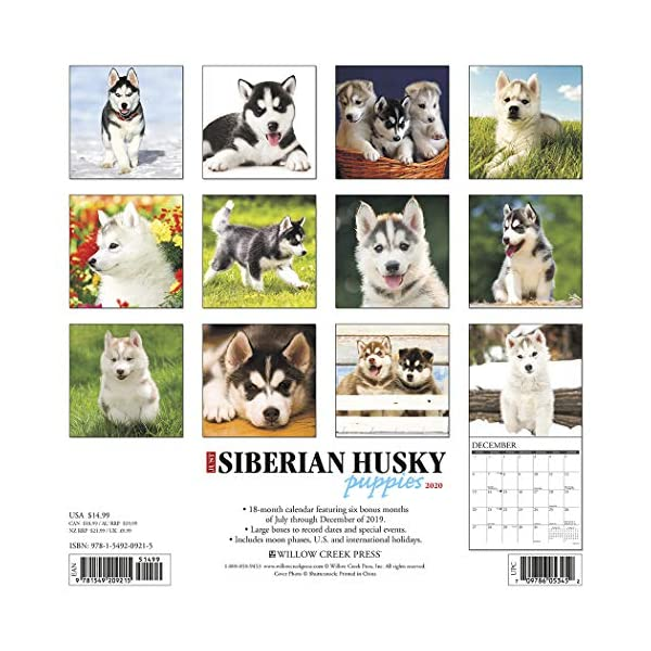 Just Siberian Husky Puppies 2020 Wall Calendar (Dog Breed Calendar) 1