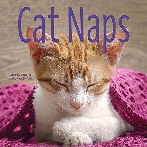 Avalon 2018 Cat Naps Wall Calendar, 16 Month Calendar, 12 x 12 inches (84318)