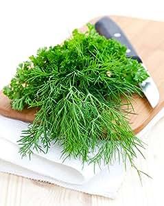 Semillas de Garden Dill Szmaragd - Anethum graveolens