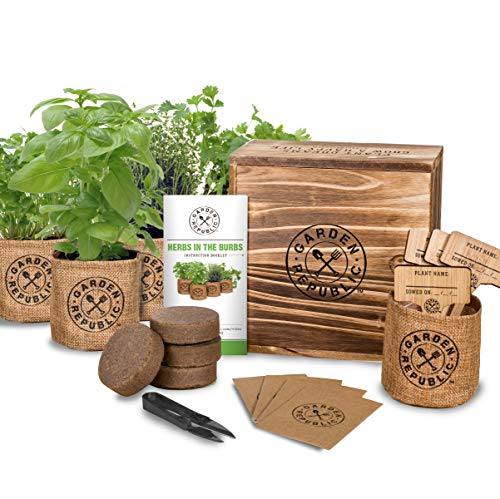 Kitchen Garden Kit: Indoor Herb Garden Starter Kit -Basil Thyme Parsley