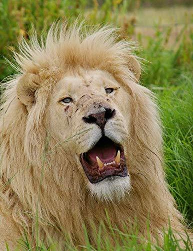 Notebook: White lion big cat animal predator mane tiger leopard elephant cat jaguar zoo rhinoceros