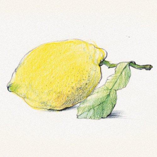 Staedtler Karat Aquarell Premium Watercolor Pencils, Set of 24 Colors (125M24) by STAEDTLER (Image #11)