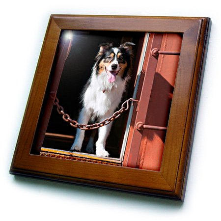 danita-delimont-dogs-australian-shepherd-in-a-train-car-8x8-framed-tile-ft-230324-1