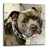 3dRose Pit Bull with Chain Collar – Wall Clock, 13 by 13-Inch (dpp_173653_2) Review
