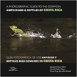 A photographic guide of the common ammphibians & reptiles of Costa Roca / Guía fotográfica de los anfibios y reptiles más comunes de Costa Rica Fotografías de Naturaleza: Amazon.es: Colvée Nebot, Salvador: