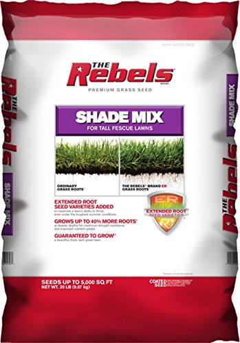 The Rebels Brand GL61100526877 Pennington 100526878 Fescue Seed Grass Plants, 20 LB