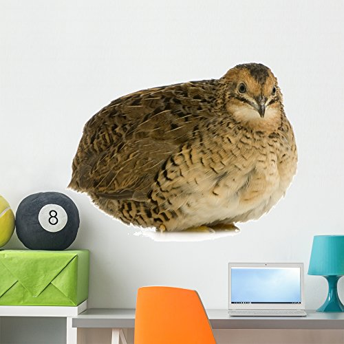 Wallmonkeys Japanese Quail Wall Decal Peel Stick Animal for sale  Delivered anywhere in USA