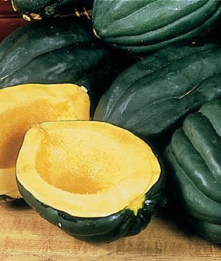 40 Heirloom Table Queen Acorn Squash Seeds -