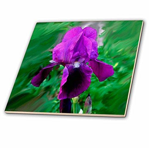 3dRose ct_1235_1 Purple Iris Ceramic Tile, 4-Inch