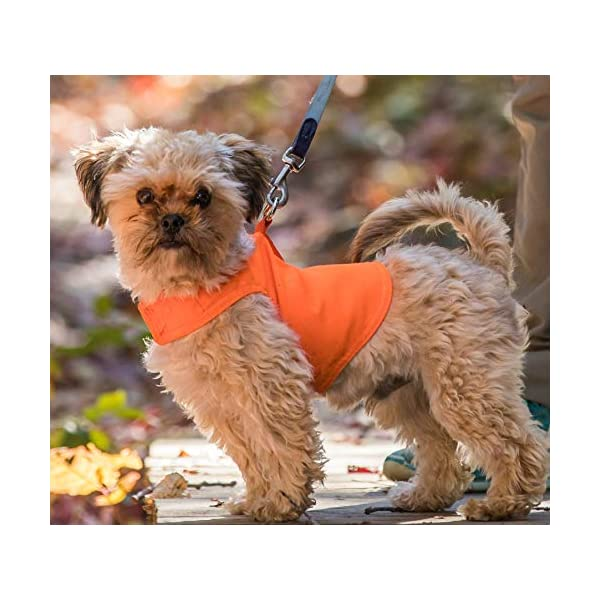 Dog Not Gone No Fly Zone Mini Safety Pet Vest, Medium, Orange Click on image for further info. 2
