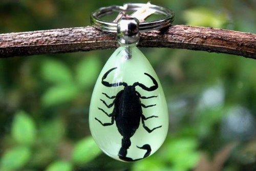 Real Insect Keychain Glows in the Dark (Black Scorpion)