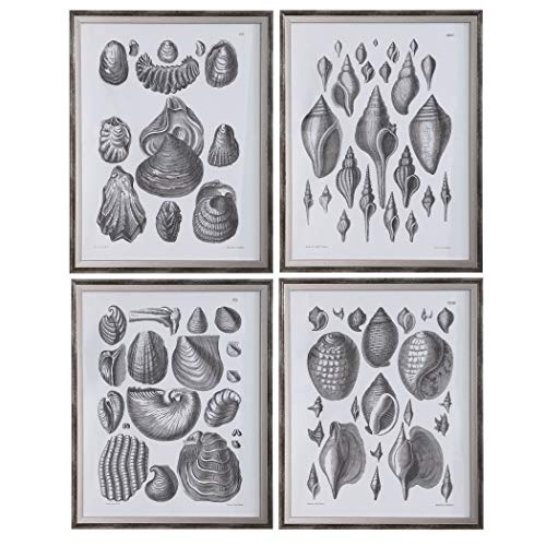 Uttermost Marine Study Framed Prints, Set/4