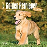 Golden Retriever Puppies 2018 7 x 7 Inch Monthly Mini Wall Calendar, Animals Dog Breeds Puppies