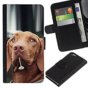 LASTONE PHONE CASE / Lujo Billetera de Cuero Caso del tirón Titular de la tarjeta Flip Carcasa Funda para Apple Iphone 6 4.7 / Vizsla Dog Breed Canine Flower Cute Pet