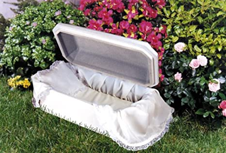 Amazon com : Affordable Family Pet Caskets Bird Casket Small
