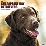 2017 Chesapeake Bay Retrievers Wall Calendar Dogs Labrador {jg} Great Holiday Gift Ideas - for mom, dad, sister, brother, grandparents, gay, lgbtq, grandchildren, grandma.