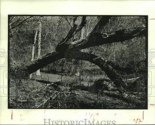 1982 Press Photo Downed tree covers Lone Star Hiking Trail in Houston