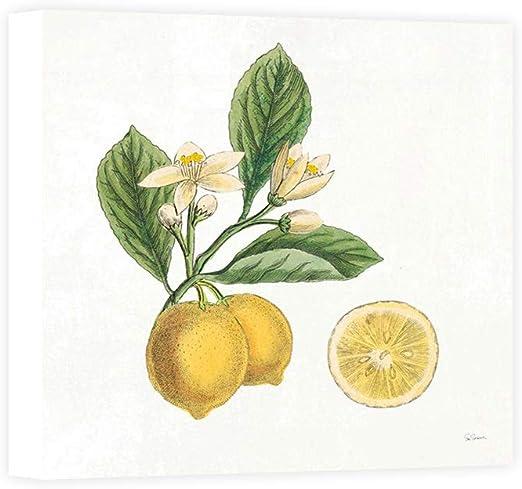 Impresión sobre Lienzo Wall Art Schlabach Sue Classic Citrus I: Amazon.es: Hogar