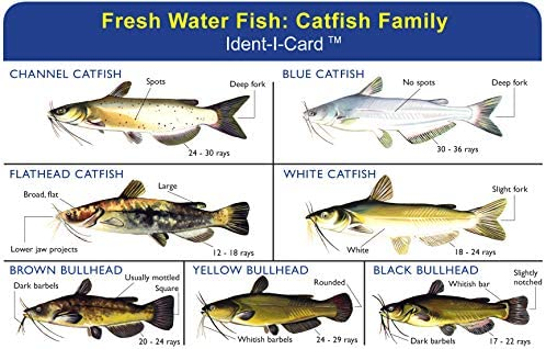 Express Yourself Products Catfish Family Ident-I-Card - Freshwater Fish Identification Card