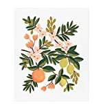 rifle paper co poster - Citrus Floral Art Print by Rifle Paper Co. (8