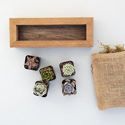 Succulent Gardens Medium Succulent Trough Planter DIY Kit, 10'' Redwood Frame, Multicolor by Succulent Gardens