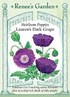 Heirloom Poppies 'Lauren's Dark Grape'