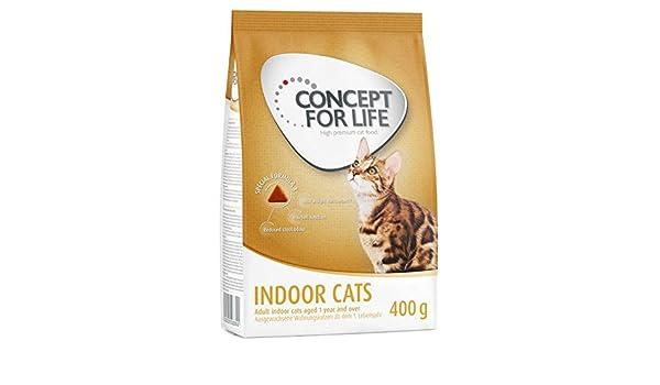 Concepto para la vida interior gatos Un alimento saludable para ...