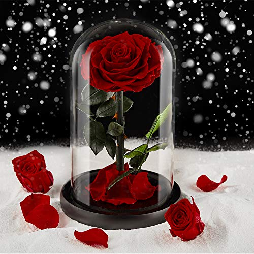 puto Preserved Real Rose Eternal Rose in Glass Dome Gift for Her Thanksgiving Christmas Valentine