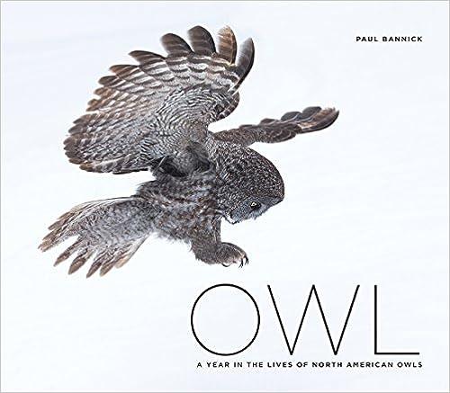 BIRDS OF PREY - BOOKS 51F0yoY9nNL._SY435_BO1,204,203,200_