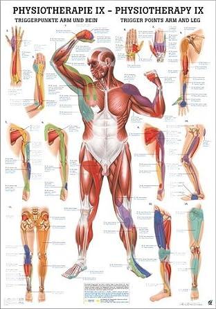 Ruediger Anatomie MIPOPHYSIX Triggerpunkte Arm und Bein Tafel, 24 cm ...