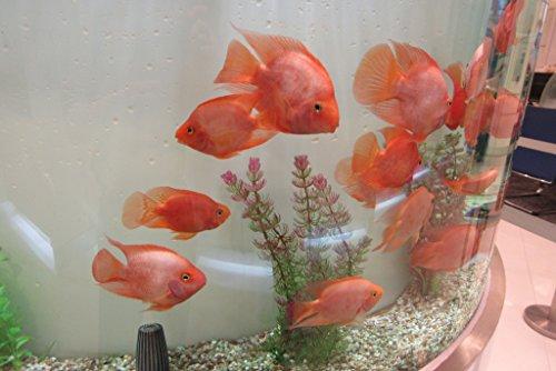 ncb-bank-branch-interiorgold-fish-tank-at-lobby-hall-of-nanyang-commercial-bank-building-queens