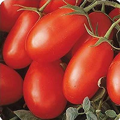 Tomato Garden Seeds - La Roma III Red Hybrid - Non-GMO, Vegetable Gardening Seed