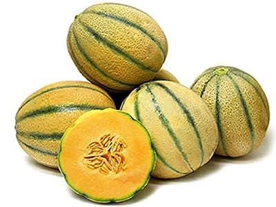Melon Cantaloupe TUSCAN Tuscany Italian Heirloom 100 SEEDS Sweet Juicy Fruit