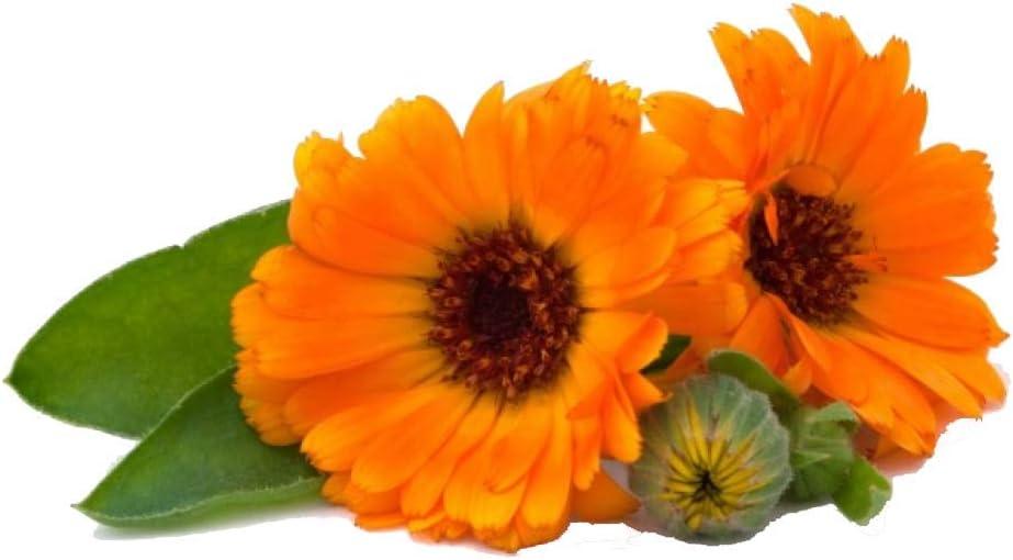 Semillas de Caléndula - Calendula officinalis
