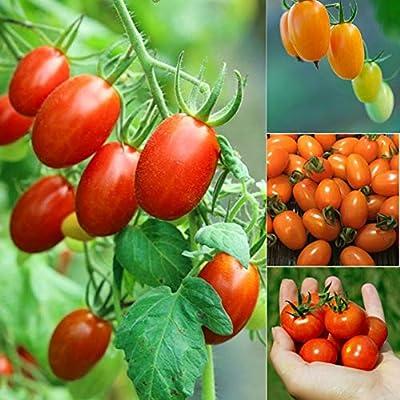 wpOP59NE 85/175/1250/2500/5000Pcs Rainbow Cherry Tomato Mixed Seeds Colorful Garden Plant - 1250pcs Mixed Rainbow Cherry Tomato Seeds Plant Seeds : Garden & Outdoor