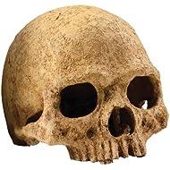 Exo Terra Primate Skull Terrarium D