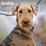 Airedale Calendar 2017 - Airedale Terrier Calendar - Dog Breed Calendars - 2016 - 2017 wall calendars - 16 Month by Avonside