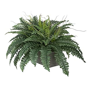 House of Silk Flowers Artificial Fern in Grey-Washed Wood Ledge 2
