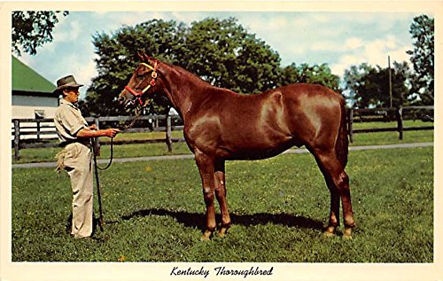 Kentucky Thoroughbred, Yearling Ready for sale Lexington, Kentucky, KY, USA Old Vintage Horse Racing Postcard Post Card