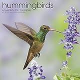 Hummingbirds Wall Calendar (2017)