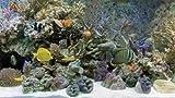 3D Aquarium [Blu-ray 3D]