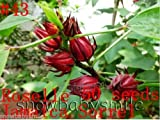 Roselle -Jamaica Sorrel -Hibiscus Sabdariffa 50 seeds, Variety Herb Seeds Garden Aromatic Spices Plant Vegetable Medicinal Heirloom