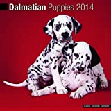 Dalmatian Puppies 2014 Wall Calendar