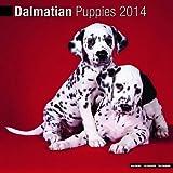 Dalmatian Puppies 2014 Wall Calendar