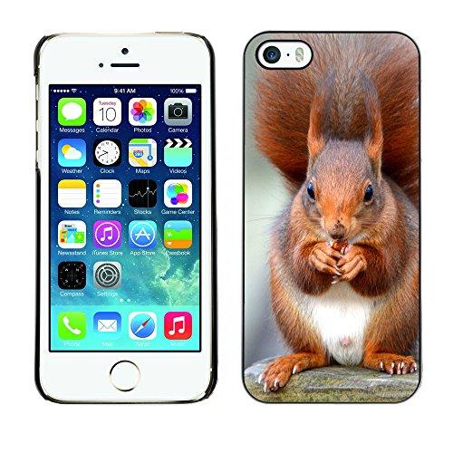 Premio Sottile Slim Cassa Custodia Case Cover Shell // F00013939 Red Squirrel // Apple iPhone 5 5S 5G