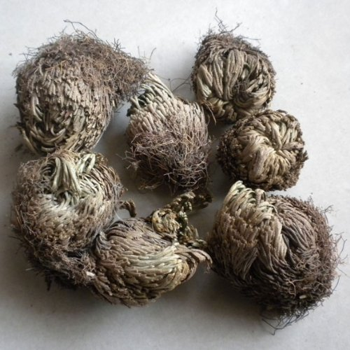 Jiu Si Huan Hun Cao (Selaginella Tamariscina/Tamariskoid Spikemoss Herb) Can Be Planted and Can Be Used As Medicine 250g