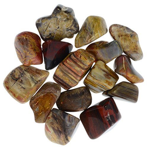 Digging Dolls: 1 lb Tumbled Petrified Wood Stones from Madagascar - 0.75'' to 1.50'' Avg. - Exceptional Quality Rocks for Crafts, Art, Crystal Healing, Wicca, Reiki and More! by Digging Dolls