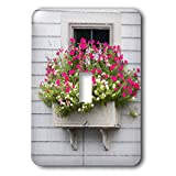 3dRose Roni Chastain Photography - Pink fowers by the window - Light Switch Covers - single toggle switch (lsp_295334_1)